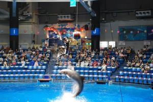 イルカでジャンプして太鼓をドン!@エプソン水族館品川プリンスホテル