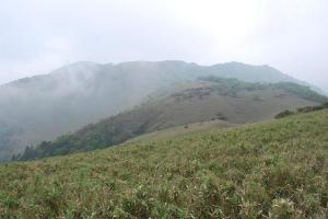 H230604 0929 竜ヶ岳まで続く笹原