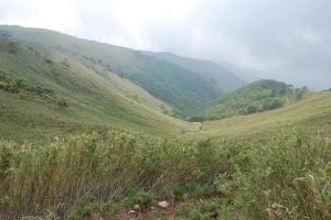 H230604 0940 ホタガ谷の登山道に合流