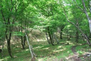 H230604 1037 若葉明るい樹林の中の縦走路