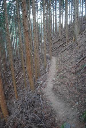H240114 1323 暗い植林地内の登山道