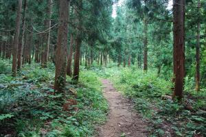 H240811 0914 しばらくは平坦な植林地を進む