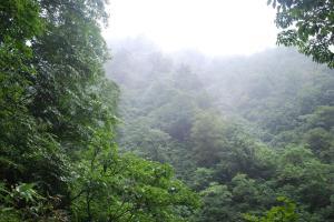 H240811 1450 雨に蒸れた森