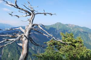 H240908 0756 枯れ木と八海山