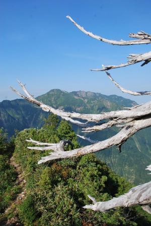 H240908 0800 枯れ枝の向こうに八海山