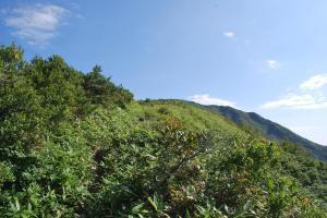 H240908 0854 低い笹に覆われつつある道