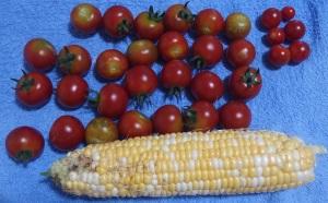 トウモロコシ1累計2ガンバ27累計62ベランダキャロル6累計27